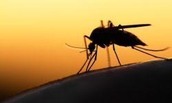 Komary. Jak sobie radzić z ukąszeniami?